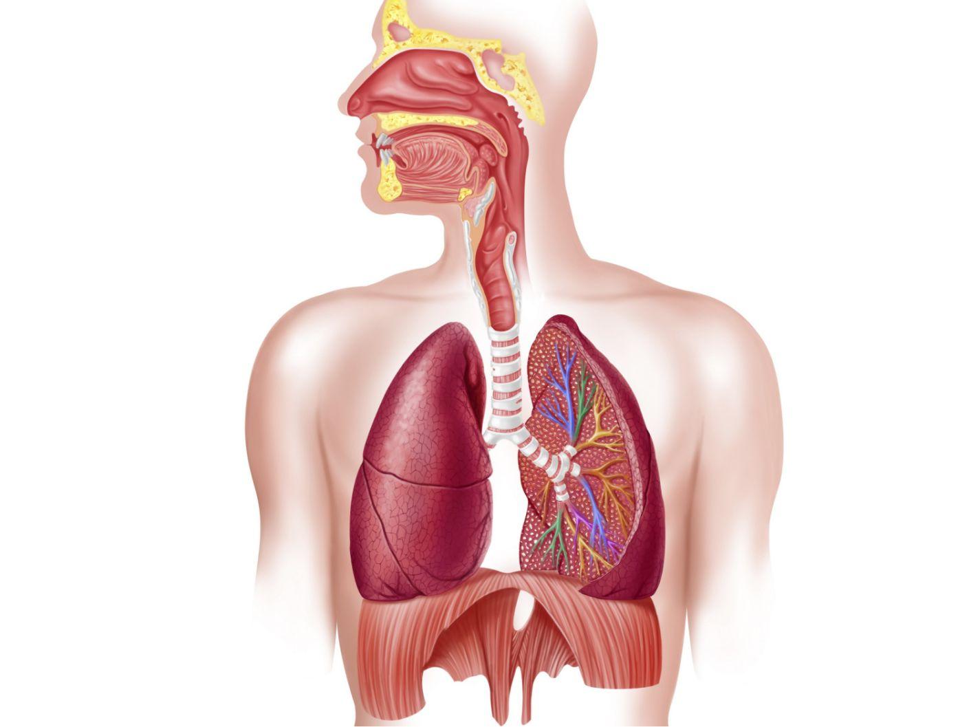 breathing system - سیستم تنفسی